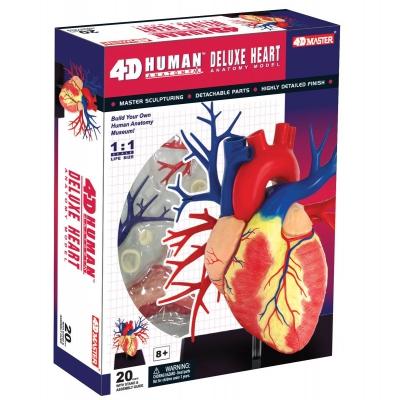 "X995321 Анатомическая модель ""Сердце Deluxe"""