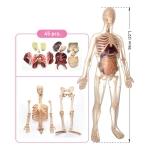 Купить ZMK002 Анатомический набор 50 см Edu-Toys