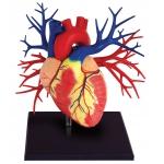 """Купить X995321 Анатомическая модель """"Сердце Deluxe"""""""