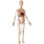 MK064 Анатомическая модель беременной женщины Edu-Toys